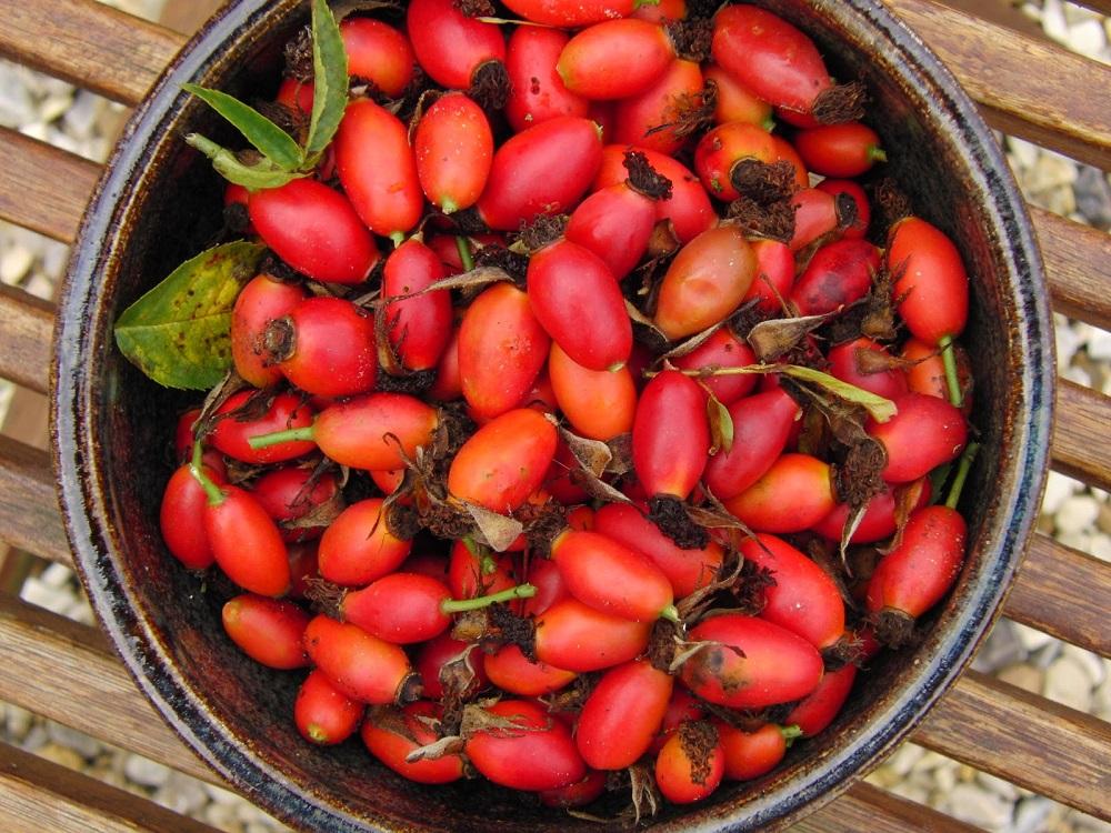 Плоди шипшини при циститі