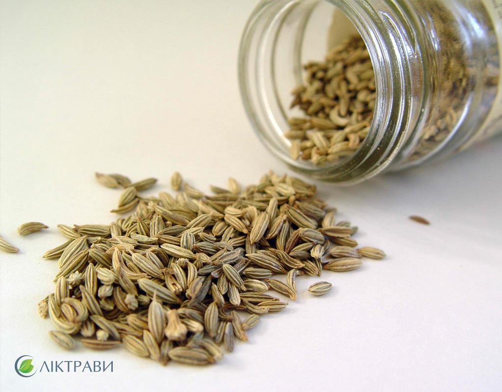 Семена фенхеля при коликах у новорожденных