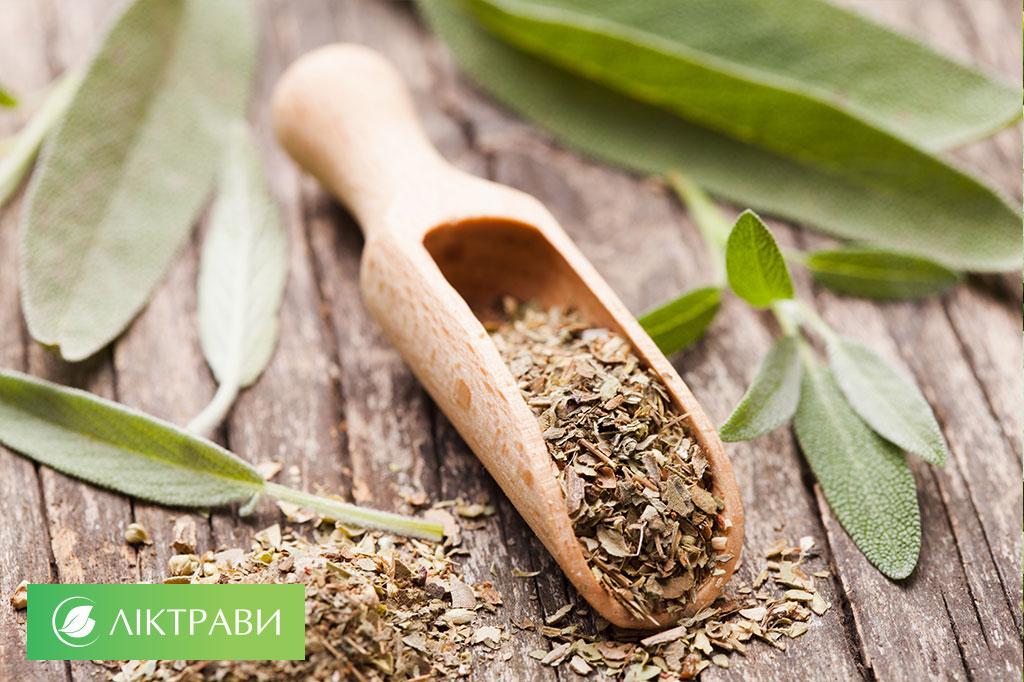 трави з антибактеріальним ефектом